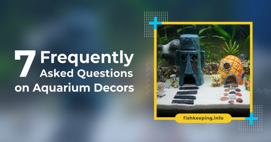 Frequently Asked Question on Aquarium Decors by en.fishkeeping.info