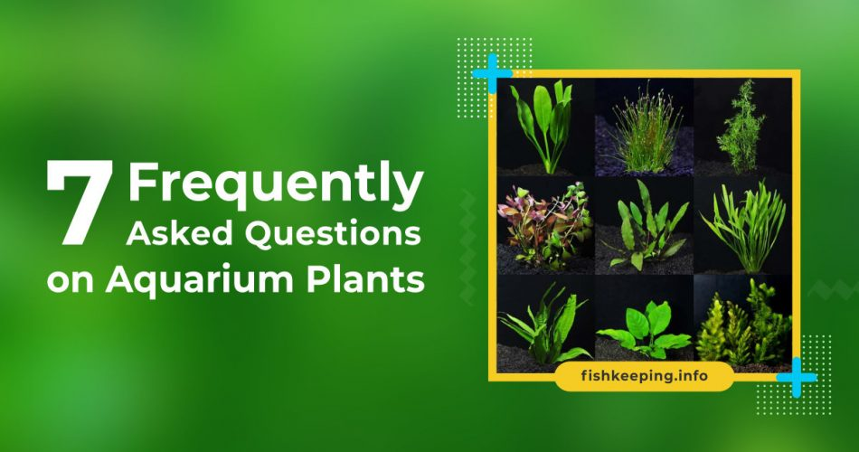 Frequently Asked Question banner on Aquarium Plants at fishkeeping.info