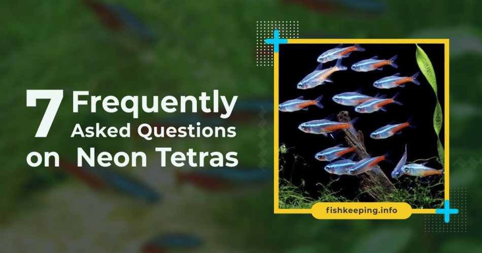 Frequently asked questions on Neon Tetras banner by fishkeeping.info