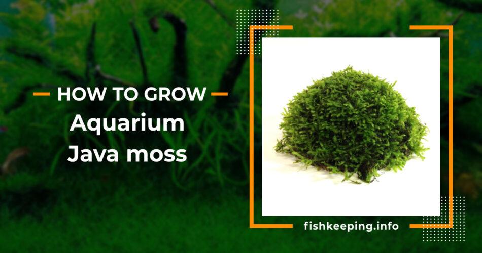 Java moss guide