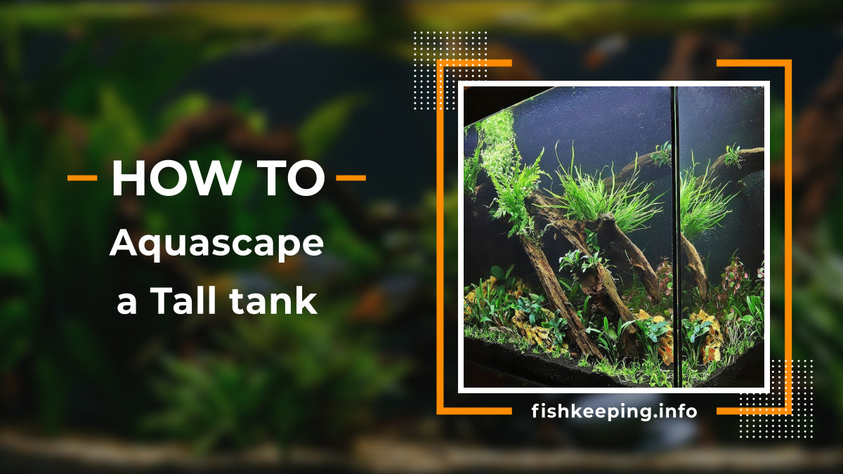 11 Step Picture Guide To Aquascape A Tall Tank All About Fishkeeping