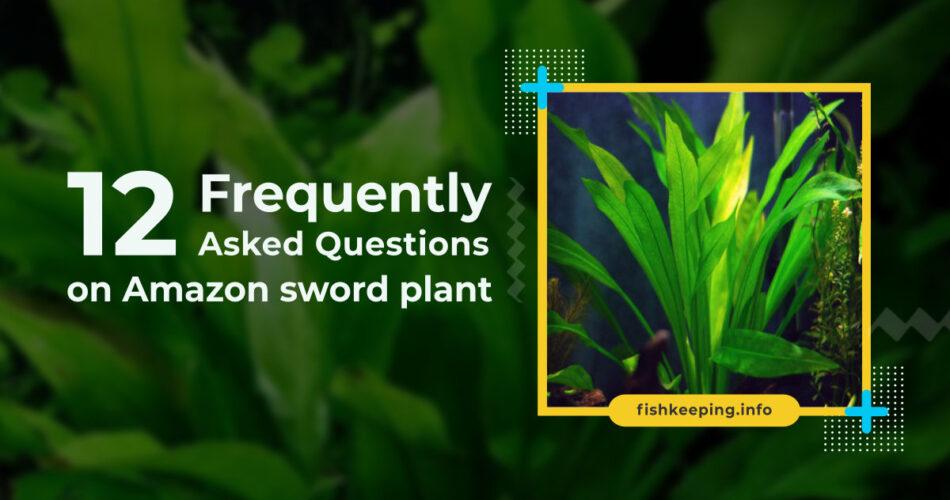 Amazon sword plant faq
