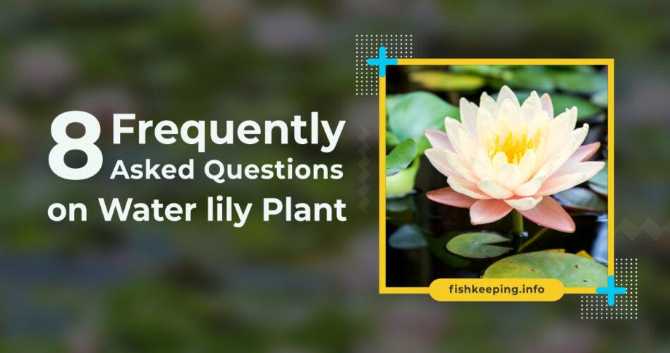 Water lily faq