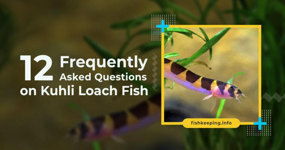 Kuhli Loach fish faq