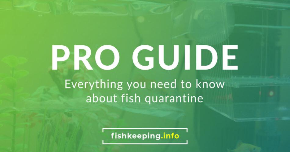 Fishkeeping Pro Guide
