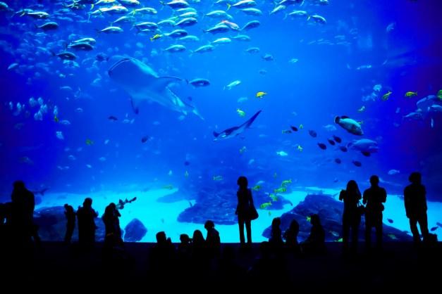 Public Aquarium